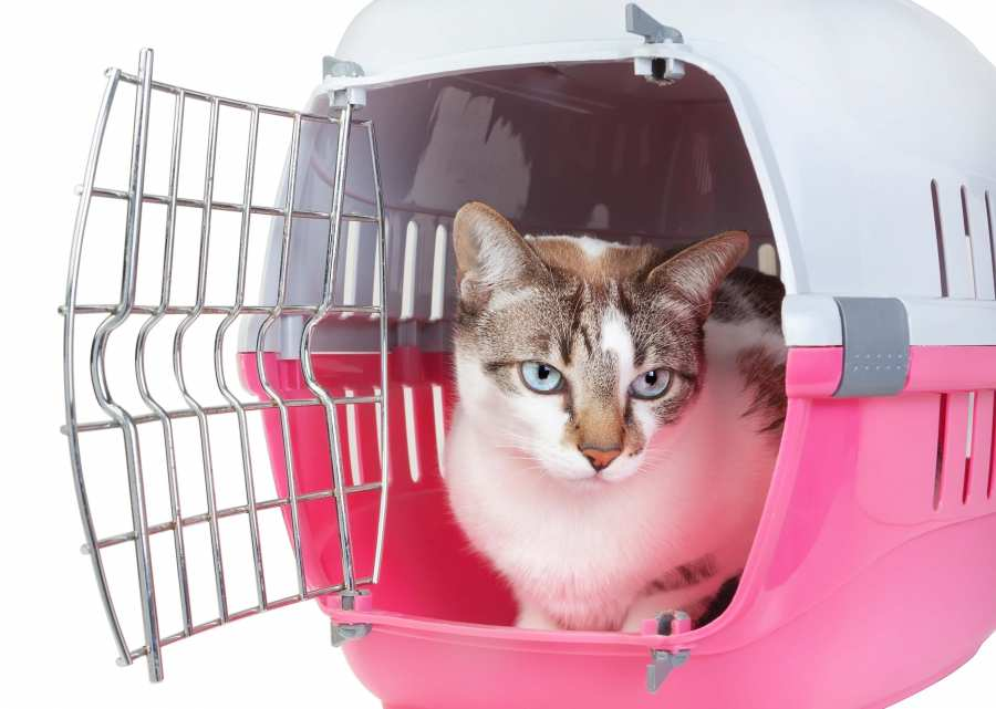 Travelling With Your Cat