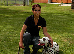 Dalmation Training