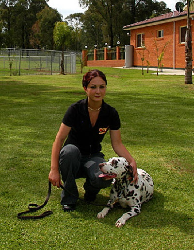 Dog Training Dalmation