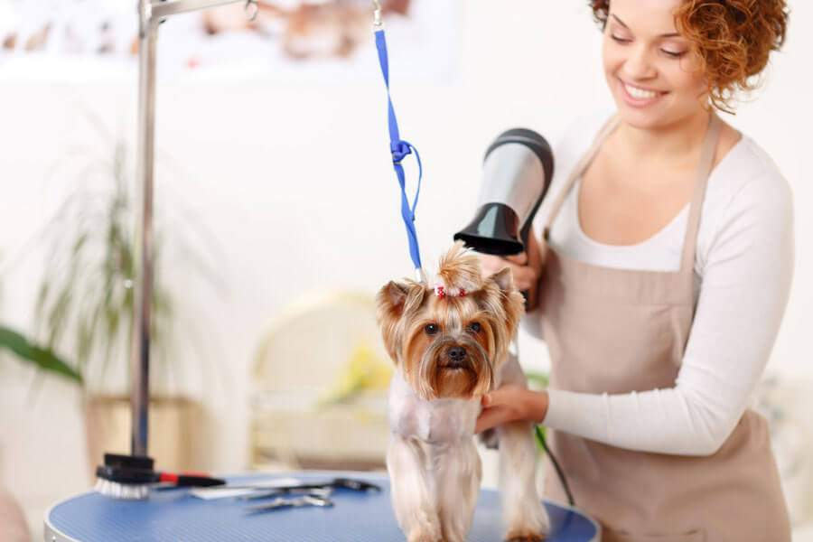 Cat & Dog Grooming