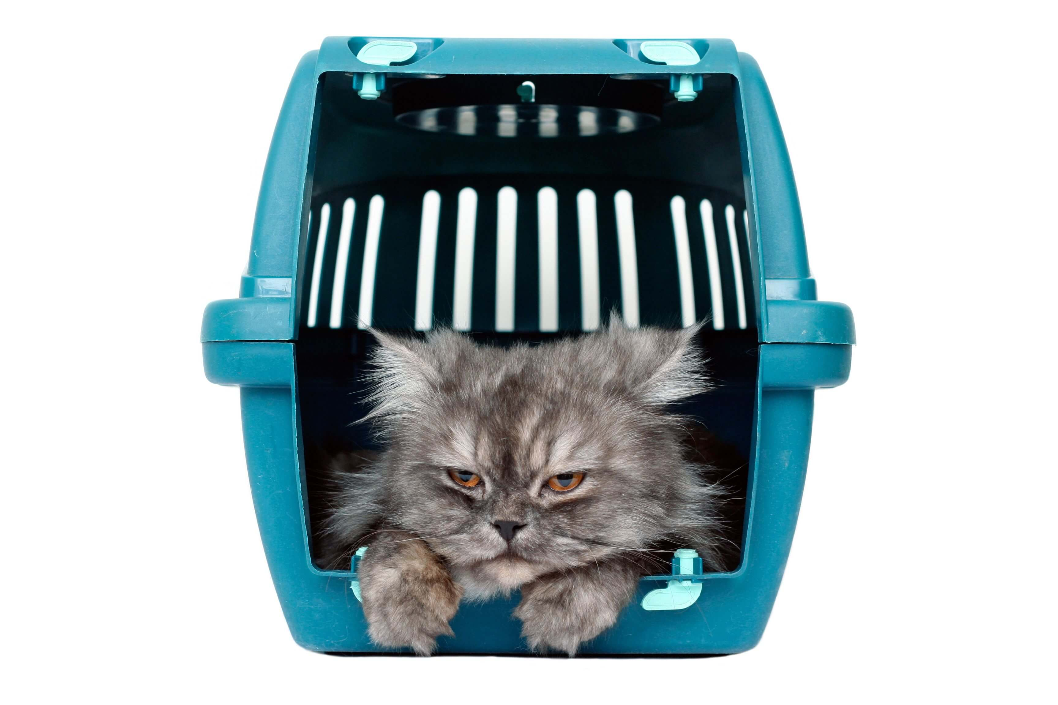 Treating Motion Sickness In Cats