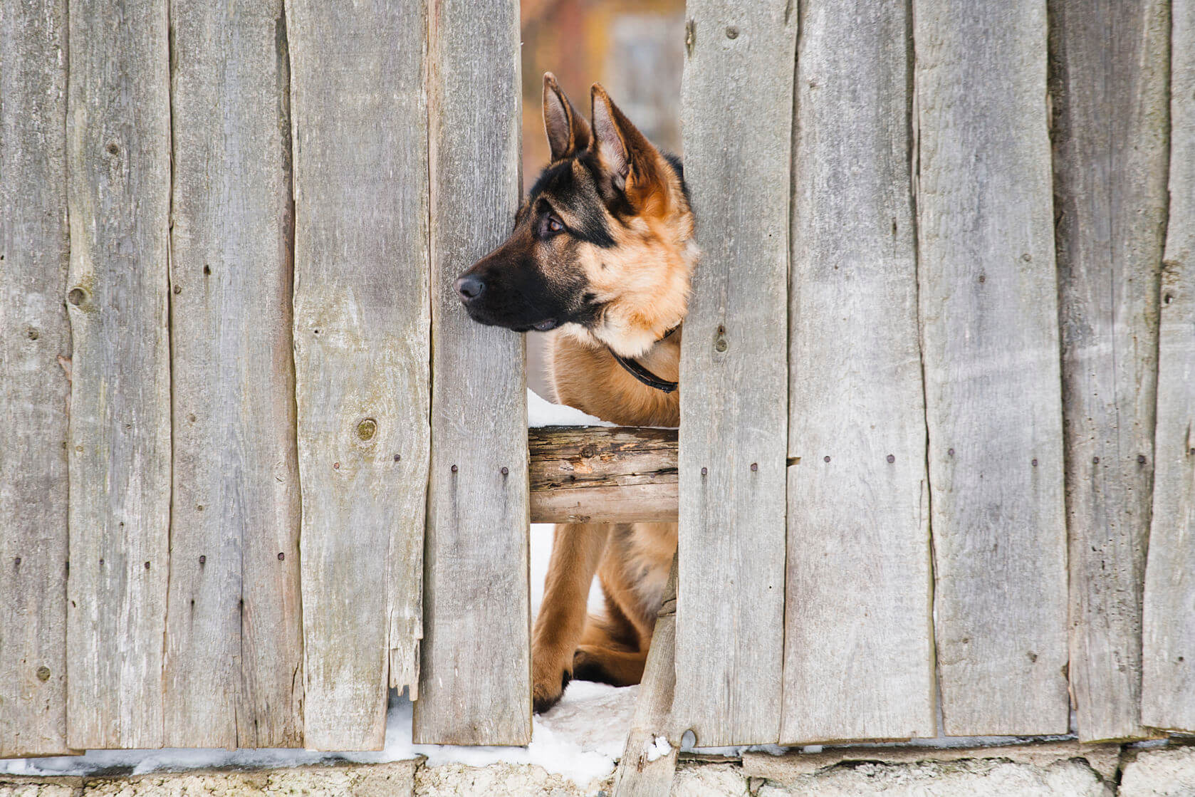Types Of Dog Fences Pets Training And Boarding