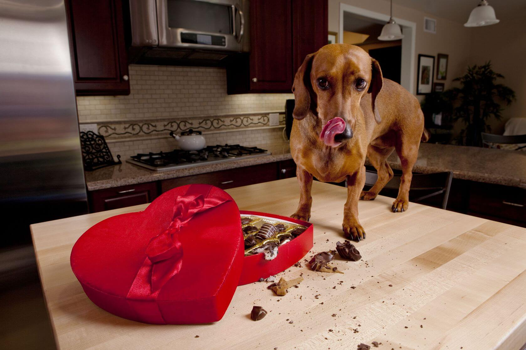 Foods That Are Bad For Your Pets