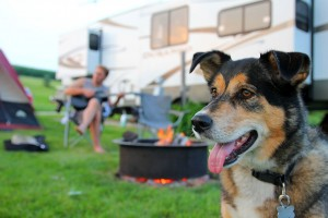 Camping with Dogs