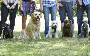 Common Dog Training Mistakes
