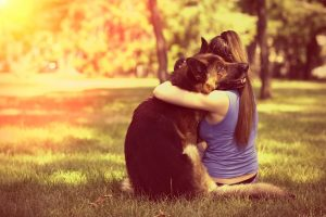 Pet Safe Outdoors