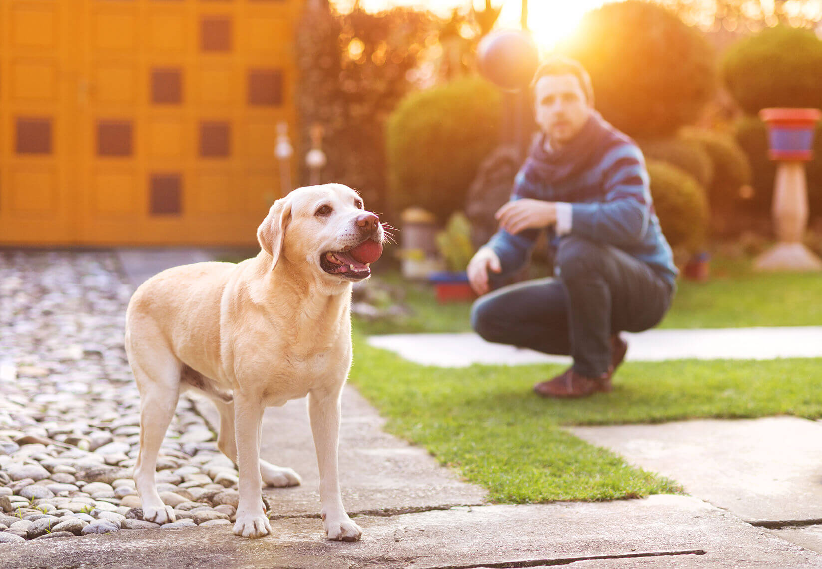 Dog Friendly Backyard ideas