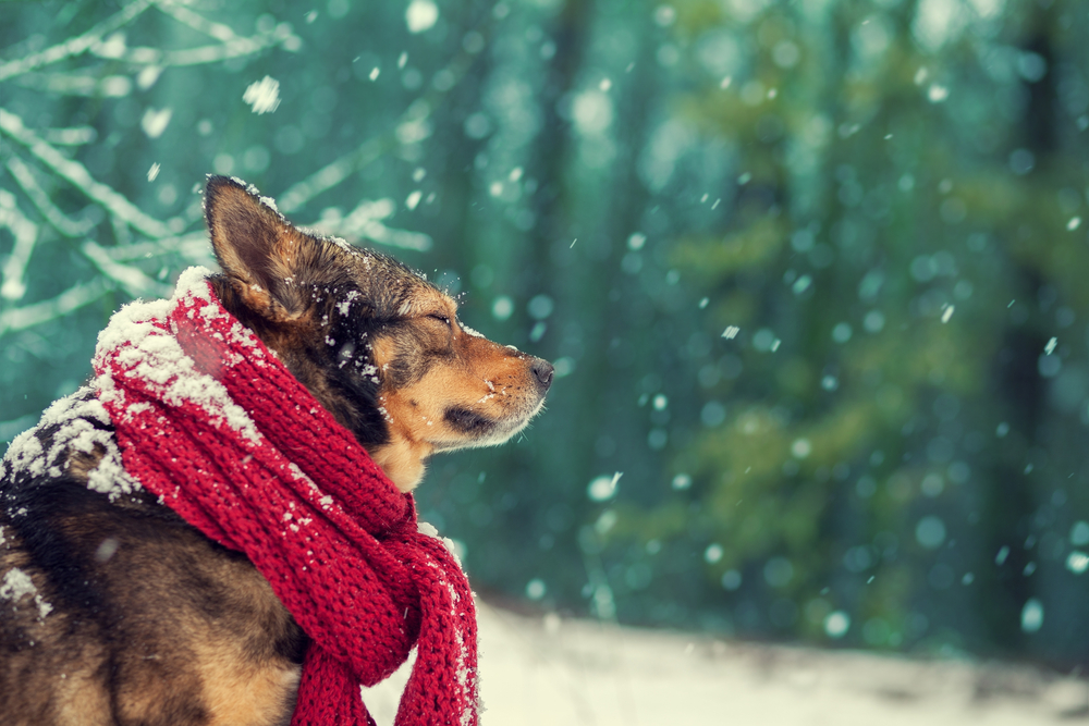 Ways To Keep Your Pet Warm In Winter