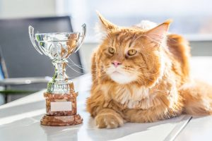 Cat Guinness World Records