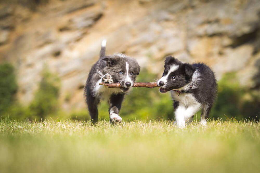 Understanding Socialisation In Puppies