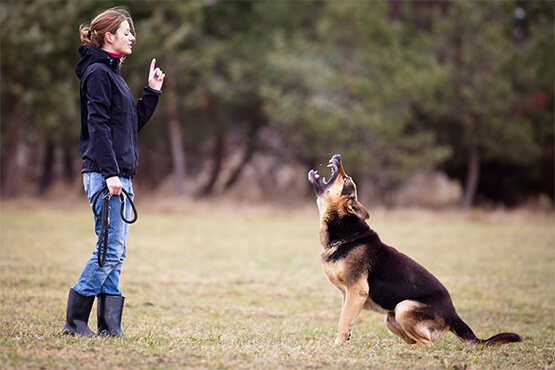 dog boarding training