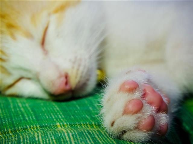 Cat's Pads and Paws