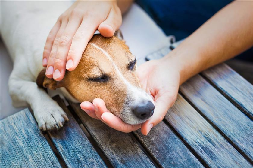 Signs Of illness In Your Dog