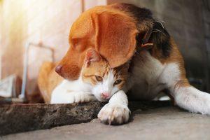 cat loving dog breeds